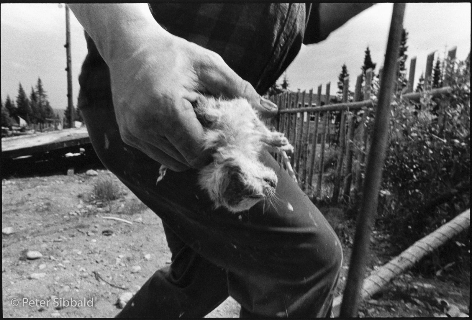 Dave Hart burying a dead kitten, Sheshatshiu, Nitassinan/Labrador. Copyright Peter Sibbald, 1993.