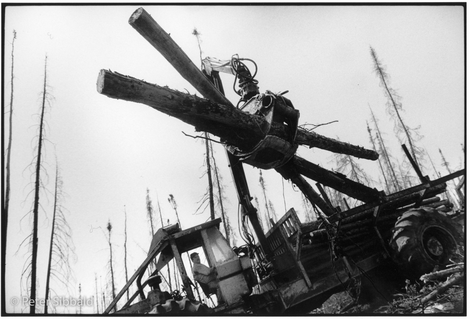 Non-Innu loggers use heavy equipment to remove timber from a forest near Sheshatshiu, Nitassinan/Labrador. The Innu argue that the land is theirs and that non-Innu business interests have no right to be there without permission from, and negotiated compensation to, the Innu. Copyright Peter Sibbald, 1990