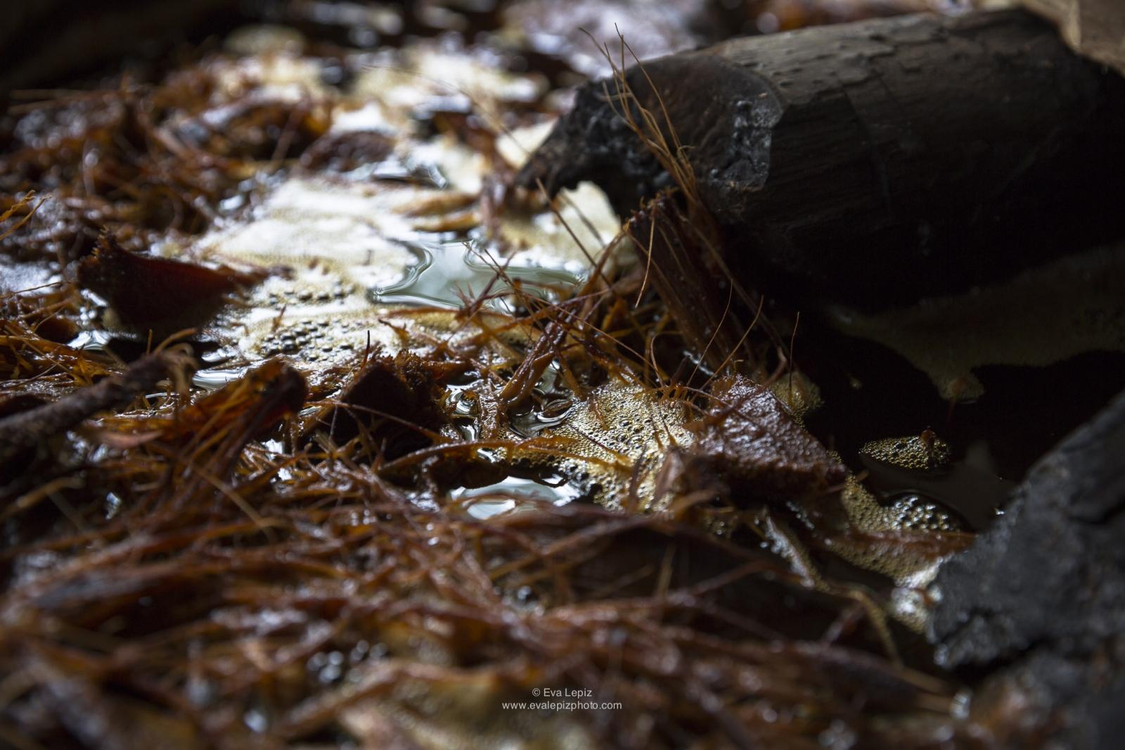 Art and Documentary Photography - Loading MEZCAL_lepiz_003_(1).jpg