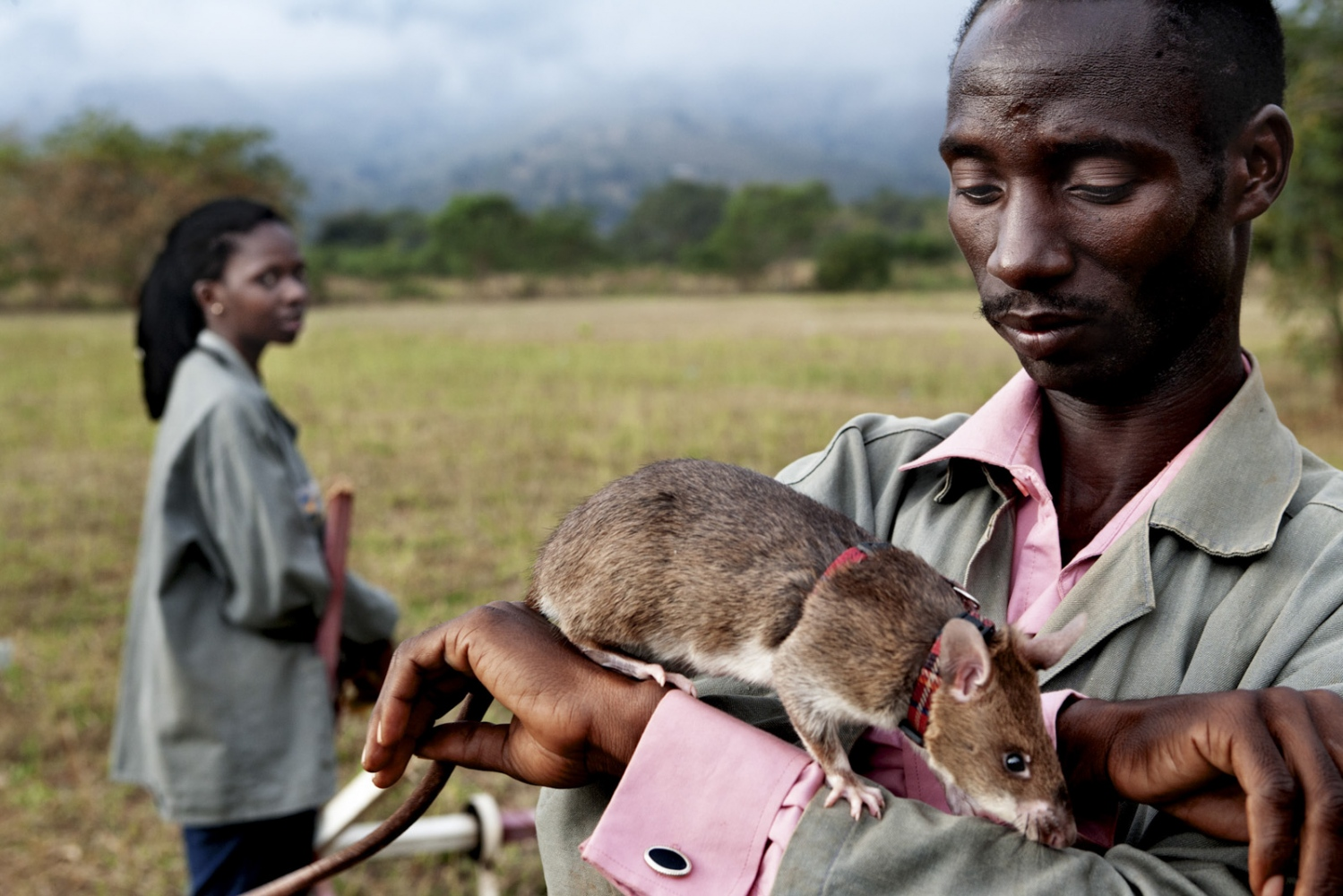 Art and Documentary Photography - Loading Hero_Rats.jpg