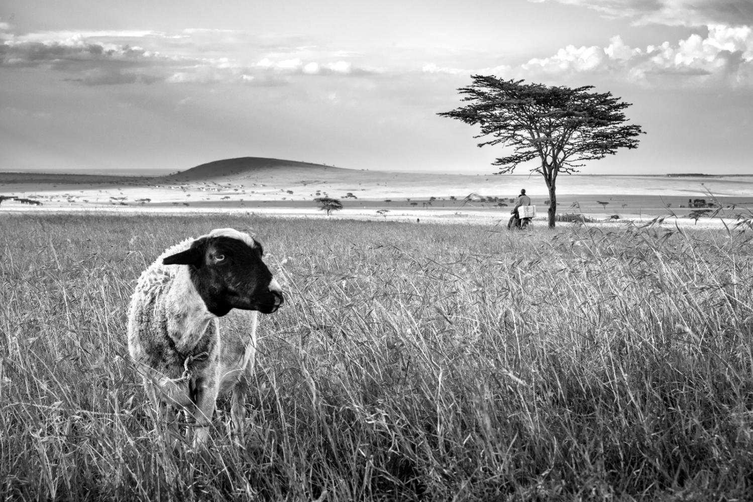 Art and Documentary Photography - Loading BIH_16.jpg