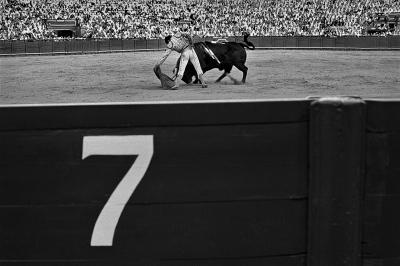 The matador Morante de la Puebla working the bull with the cape (suerte de muleta) . Seville.