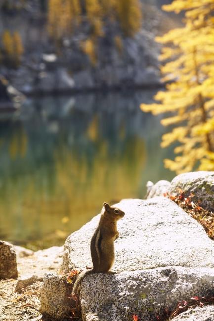 Photography image - Loading Enchantment-Lakes-_504.jpg