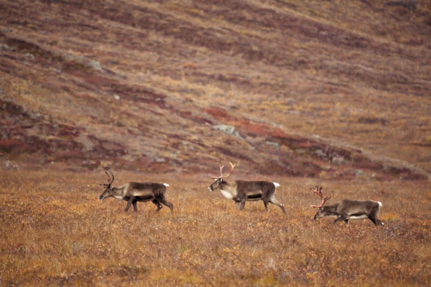 Art and Documentary Photography - Loading Rakesh-Gates-of-the-Arctic0001_DxO.jpg