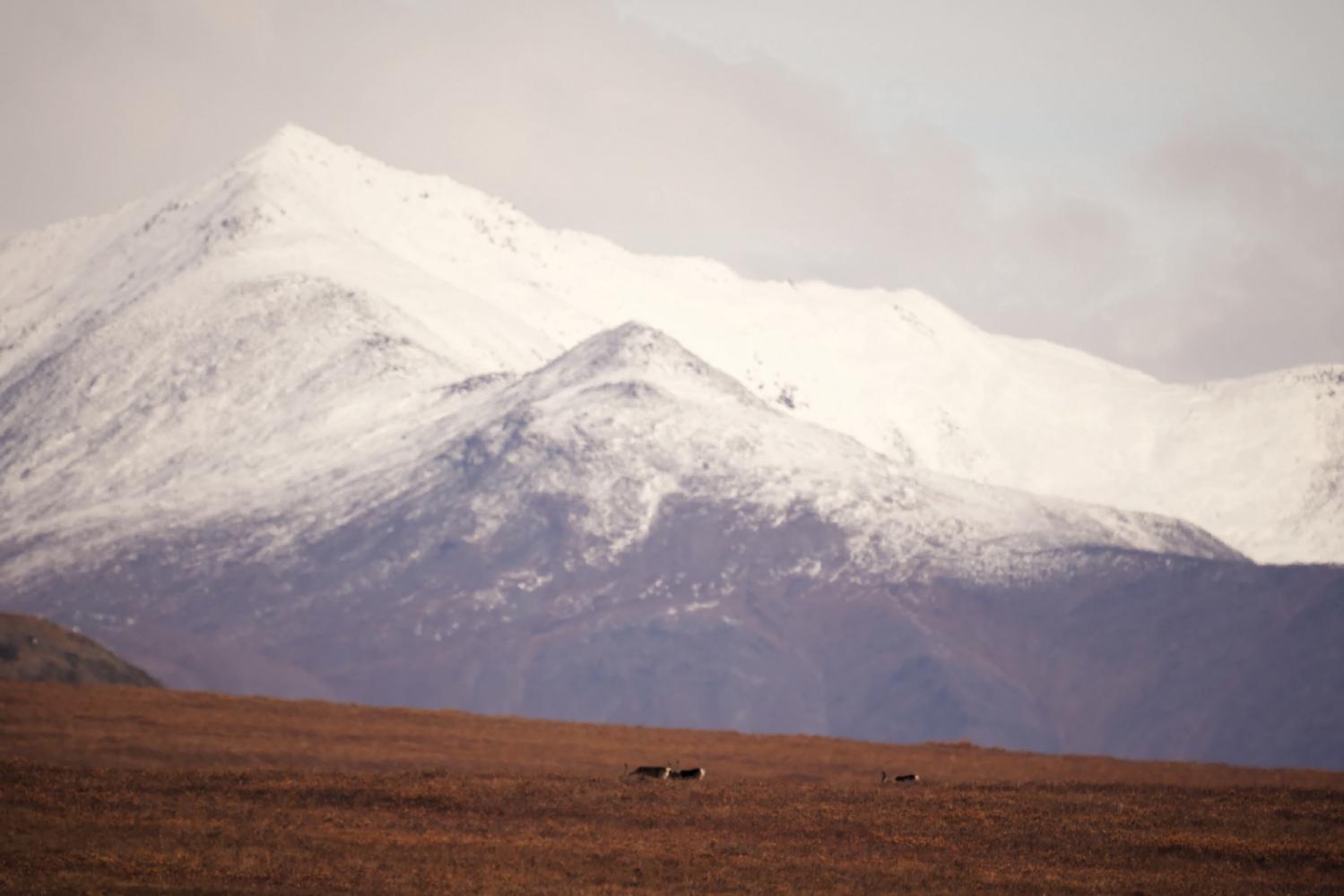 Art and Documentary Photography - Loading Rakesh-Gates-of-the-Arctic0033_DxO.jpg
