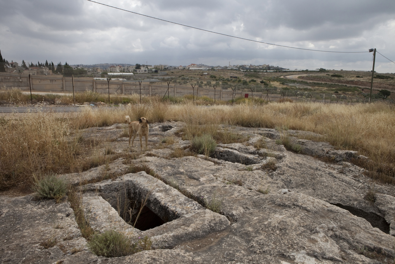 A dog barks over ancient graves, in the Israeli village of Mattan. The village's perimiter fence is also the Separation Barrier and at this point runs along the Green Line