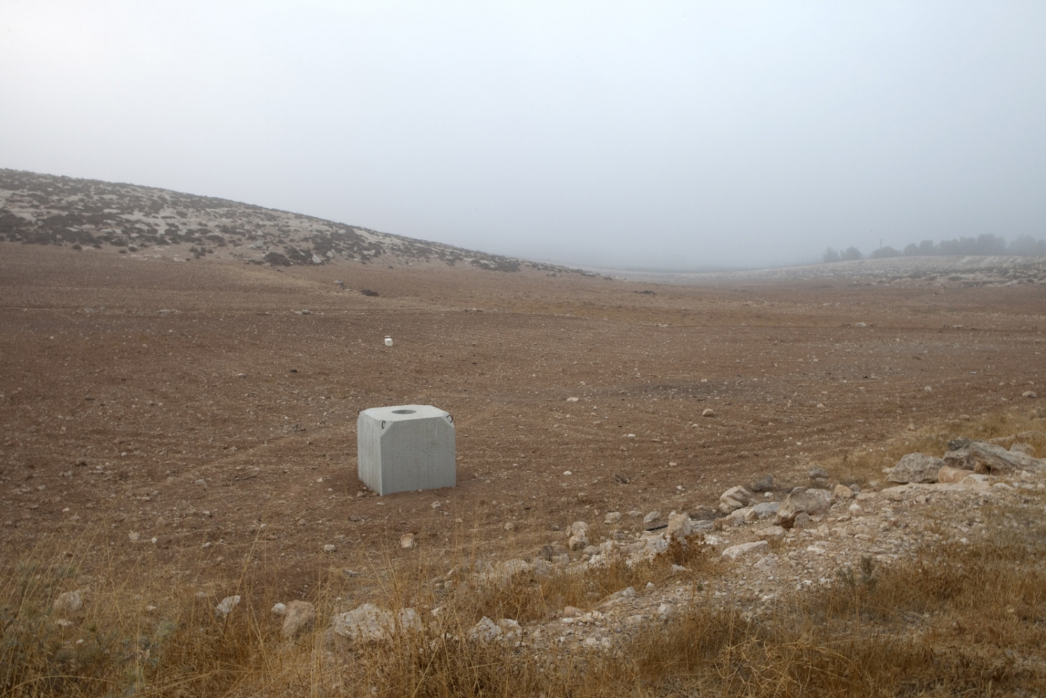 Looking south over a Palestinian field in the south Hebron Hills. The trees mark the Israeli side of the Green Line and barrier.