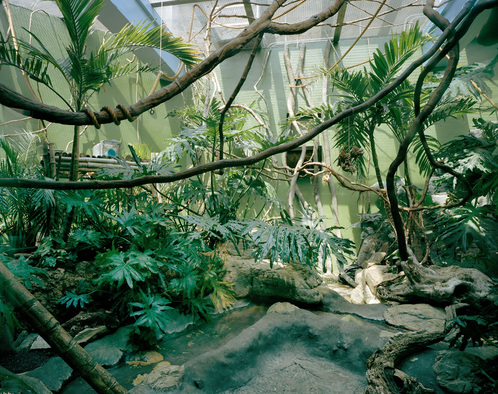 Jungle Habitat, 2013