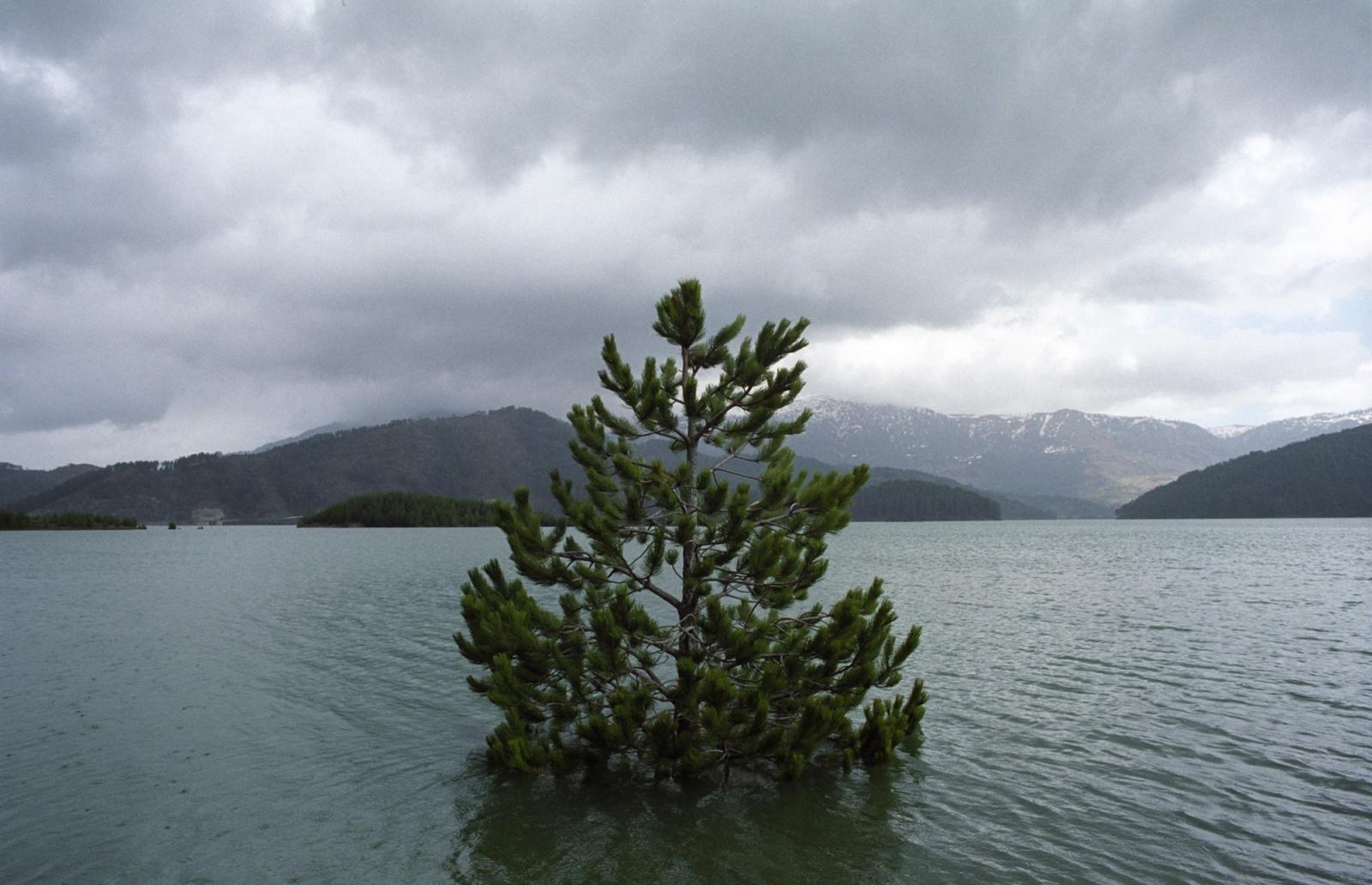 Drowning tree. Near Metsovo, northwestern Greece.