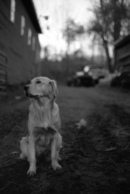 Art and Documentary Photography - Loading Dog.jpg