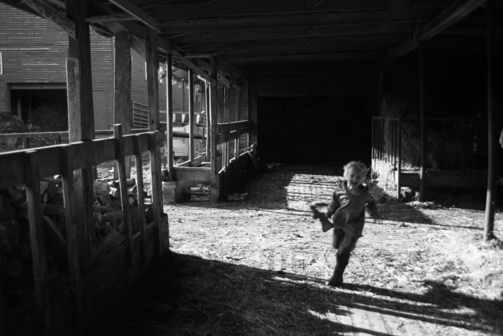 Art and Documentary Photography - Loading Oliver in Barn.jpg