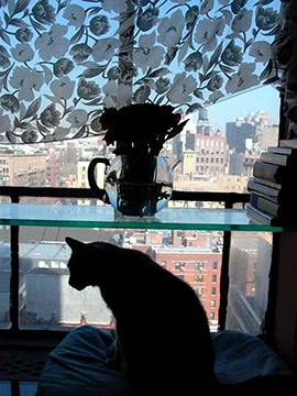 Photography image - Loading cat_silhouetteNYF_.jpg