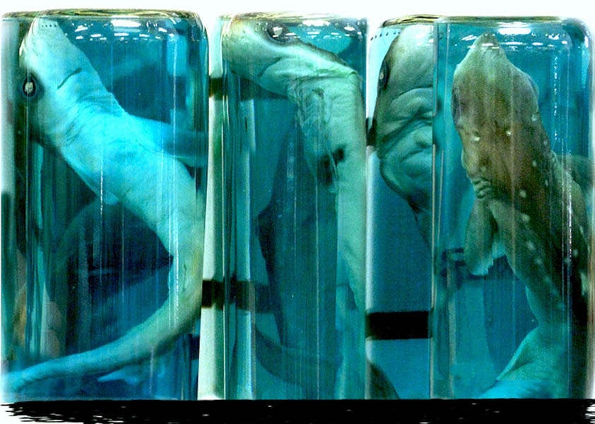 Photography image - Loading sharks.jpg