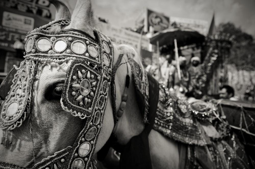 Art and Documentary Photography - Loading IMG_1223.jpg