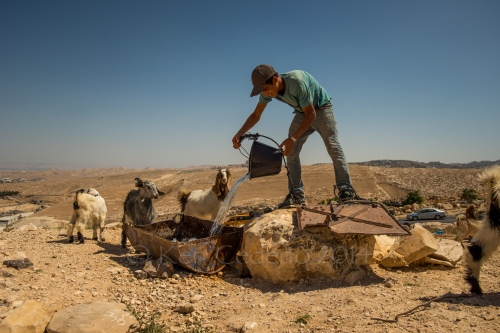 A sheep herder waters his goats near his Bedouin Camp in the West Bank, Israel April 28, 2014. Photo Ken Cedeno