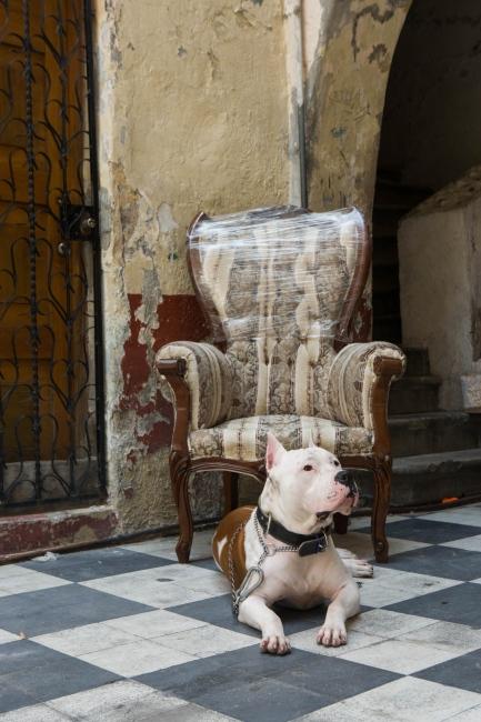 · Hitter. Brian´s dog. Loved by few, hated by many. Sunbathing on the courtyard. August 31st, 2009. // · Hitter, el perro de Brian. Amado por pocos, odiado por muchos tomando el sol en el patio. 31 de agosto de 2009