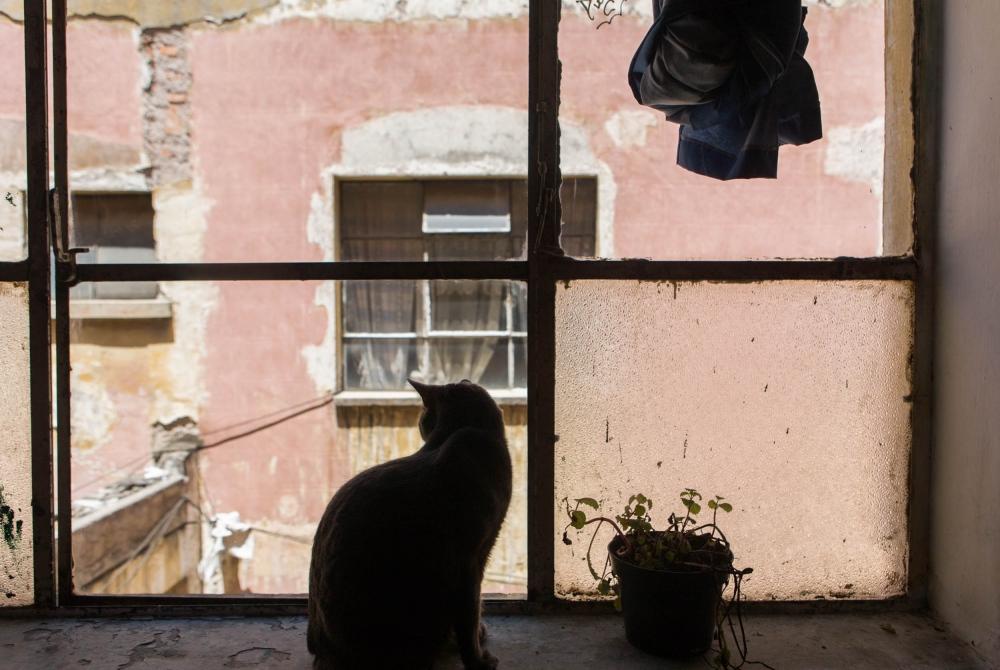 · Sipion. One of Charlie and his kids, Amapola and Carlos´s 5 cats. View from the livingroom to the courtyard.November 8th, 2009 - // · Sipion. Uno de los cinco gatos de Charli y sus hijos Carlitos y Amapola. Vista desde la sala hacia el patio central. 8 de noviembre de 2009.