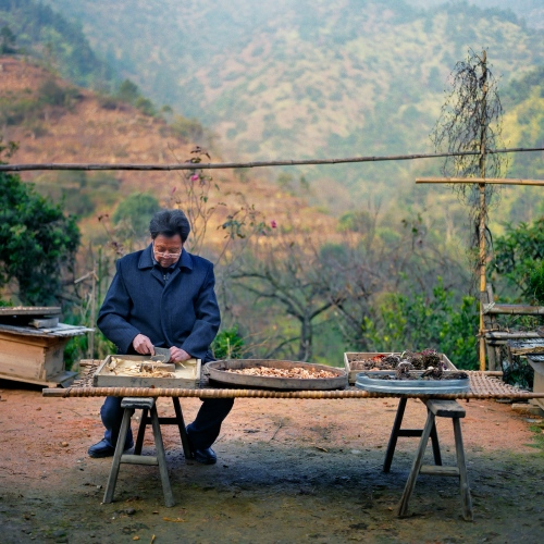 A Chinese medical practitioner cuts herbs in a remote village in the Jiangxi province of China.