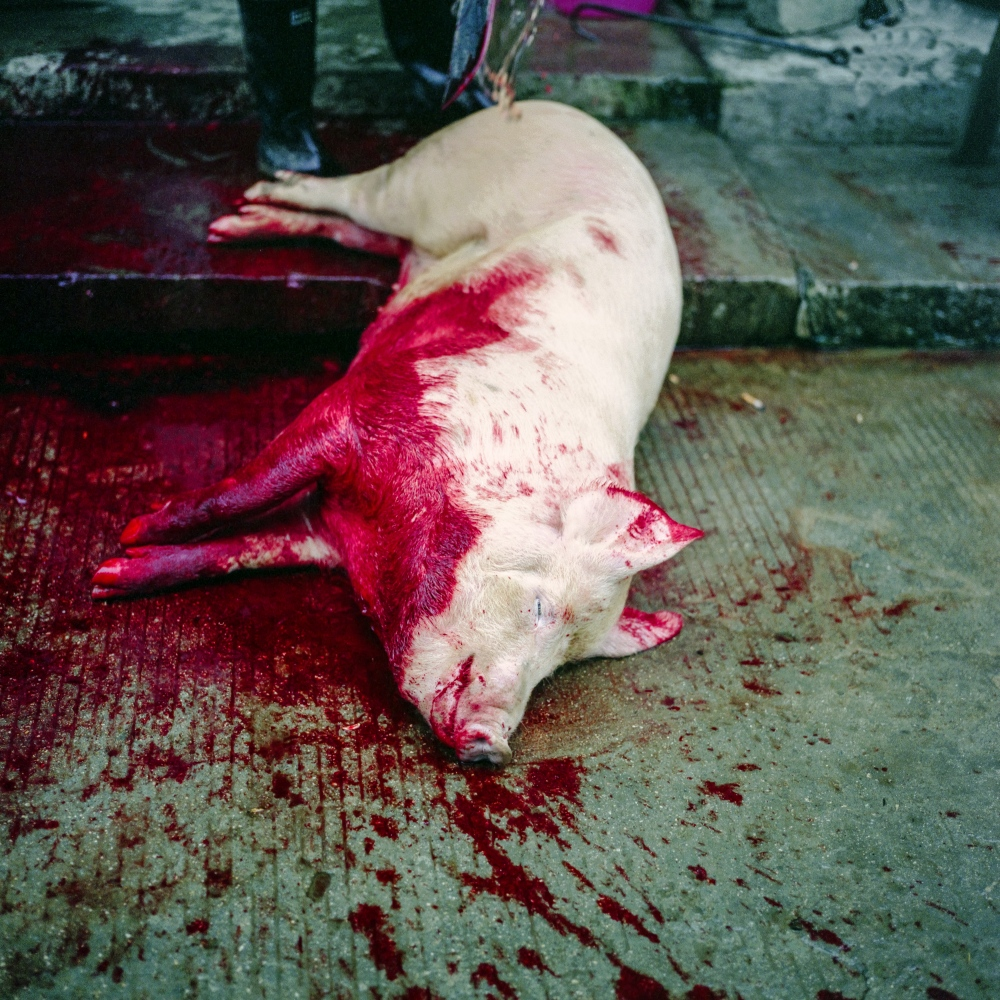 A pig in slaughtered in YungpanXu in the Jiangxi province in China.