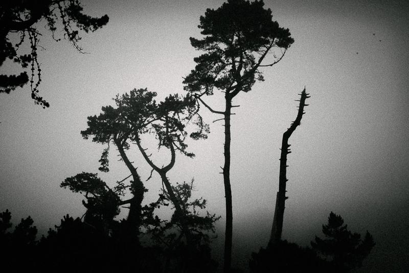 Photography image - Loading Matt_Propert_monochrome-2.jpg