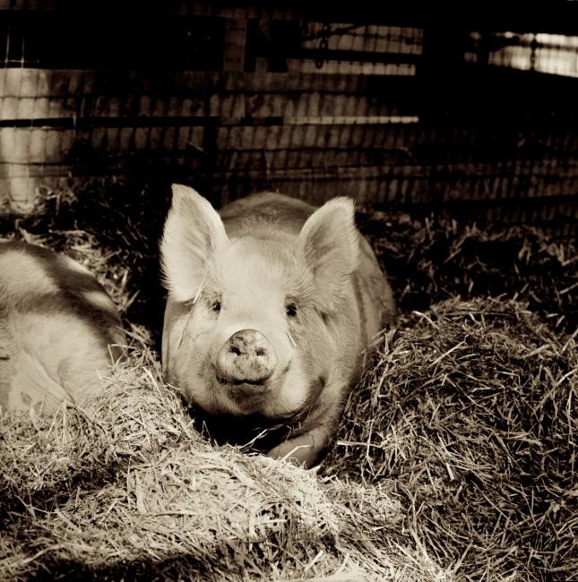 Photography image - Loading Ogar_Farm_Sanctuary.jpg