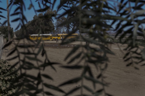 School buses used for transportation of farmworkers to the fields. In San Quintin, thousands of indigenous farmworkers are hired on a daily basis as a source of cheap and flexible labor. They endure long hours hand-picking produce in extremely hot temperatures for as little as 9 dollars a day.