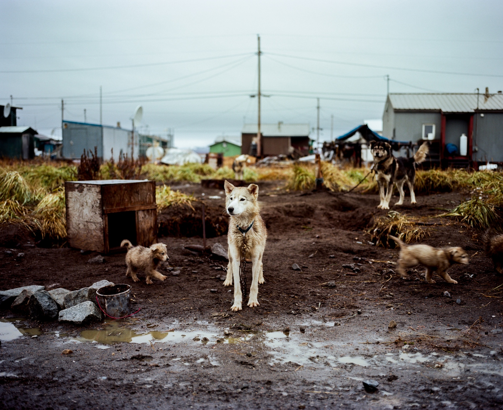 Lucy Adams' dog kennel in Kivalina, Alaska.