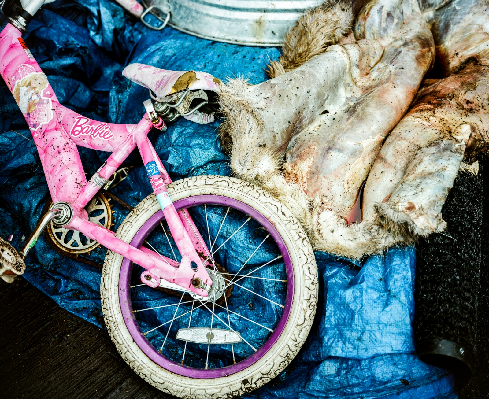 A bicycle and caribou hide in Kivalina, Alaska.