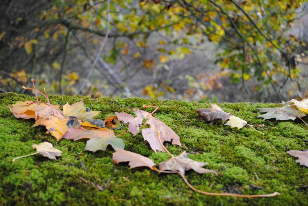 Fall countryside around Šumperk and in Jeseníky mountains