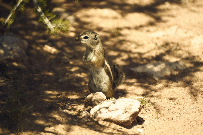 Art and Documentary Photography - Loading Desert-Flowers-_1768-web.jpg