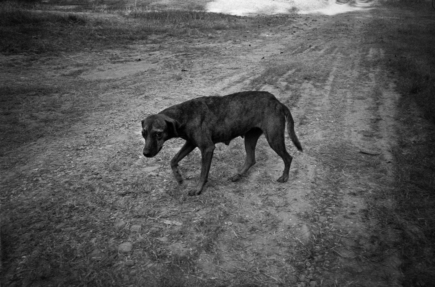 Art and Documentary Photography - Loading ElPerro__Ozuluama__sdeswaan.jpg