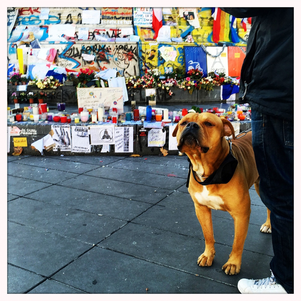 People and their pets gather at Place de la République to pay their respect to the victims of the terrorist attack in Paris.