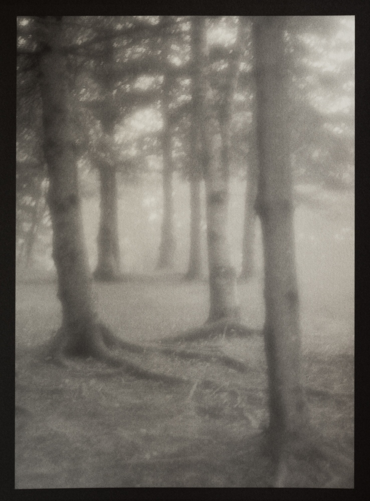 Grove, Owls Head, Maine.  Palladium Toned Kallitype (Henry Hall Black Developer) on Arches Platine Paper, 7x10.5""