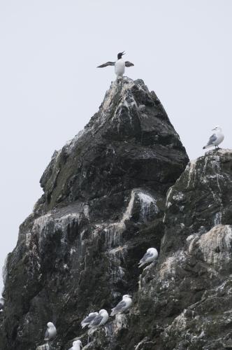 A bird sits atop a rocky cliff in Kachemak Bay near Homer, AK.