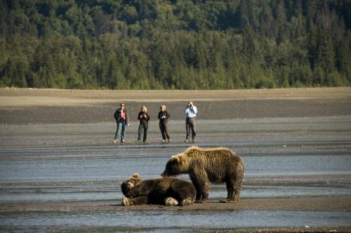 Bear viewing nearKachemak Baywith Smokey Bay Air out of Homer, AK.