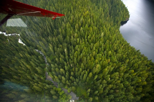 The tip of a wing can be seen as tops of trees point directly toward the plane as it flies over Misty Fjords National Monument near Ketchikan, AK Sept 19, 2009.