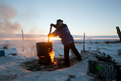 A resident of Shishmaref cooks seal meat and blubber to feed to his kennel ofsleddogs. He has couple of dozen dogs being trained sled running.