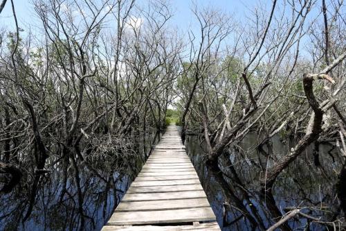Superagui Island - Brazil