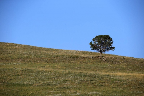 A lone tree is seen on a field near the Spanish Creek river.