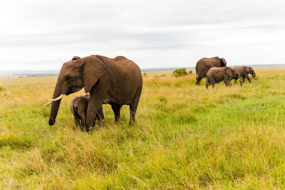 Photography image - Loading Kenya-3.jpg