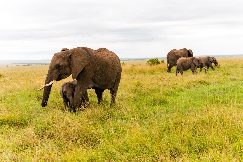 Art and Documentary Photography - Loading Kenya-3.jpg