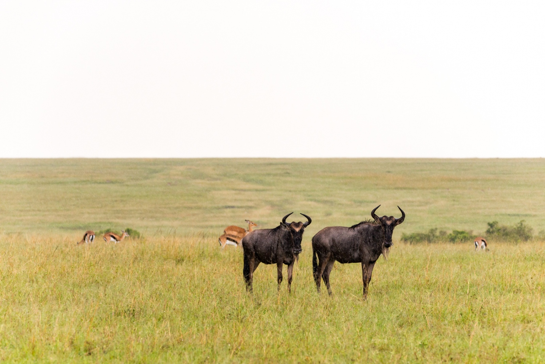 Art and Documentary Photography - Loading Kenya-4.jpg