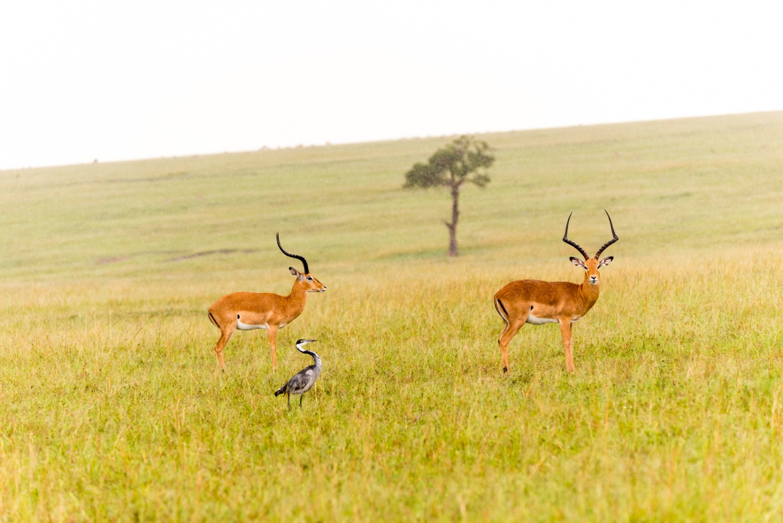 Art and Documentary Photography - Loading Kenya-5.jpg