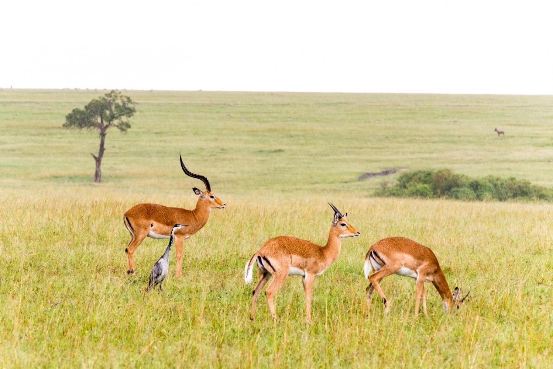 Art and Documentary Photography - Loading Kenya-6.jpg