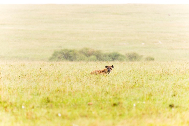 Art and Documentary Photography - Loading Kenya-7.jpg