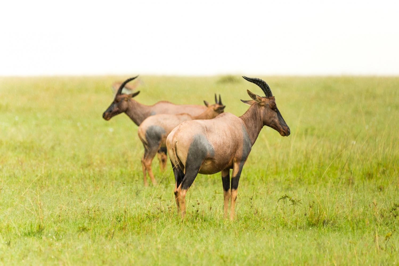 Art and Documentary Photography - Loading Kenya-8.jpg