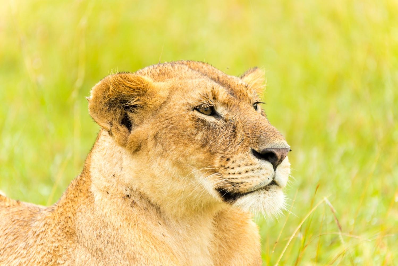 Art and Documentary Photography - Loading Kenya-16.jpg