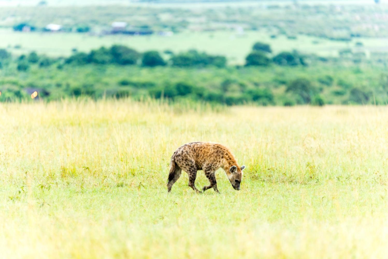 Art and Documentary Photography - Loading Kenya-17.jpg