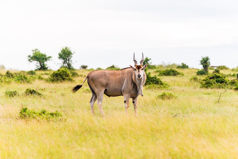 Art and Documentary Photography - Loading Kenya-22.jpg