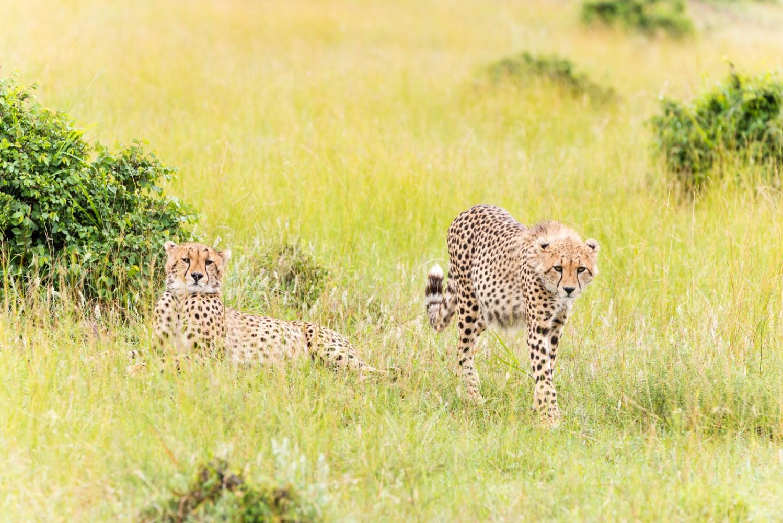 Art and Documentary Photography - Loading Kenya-23.jpg